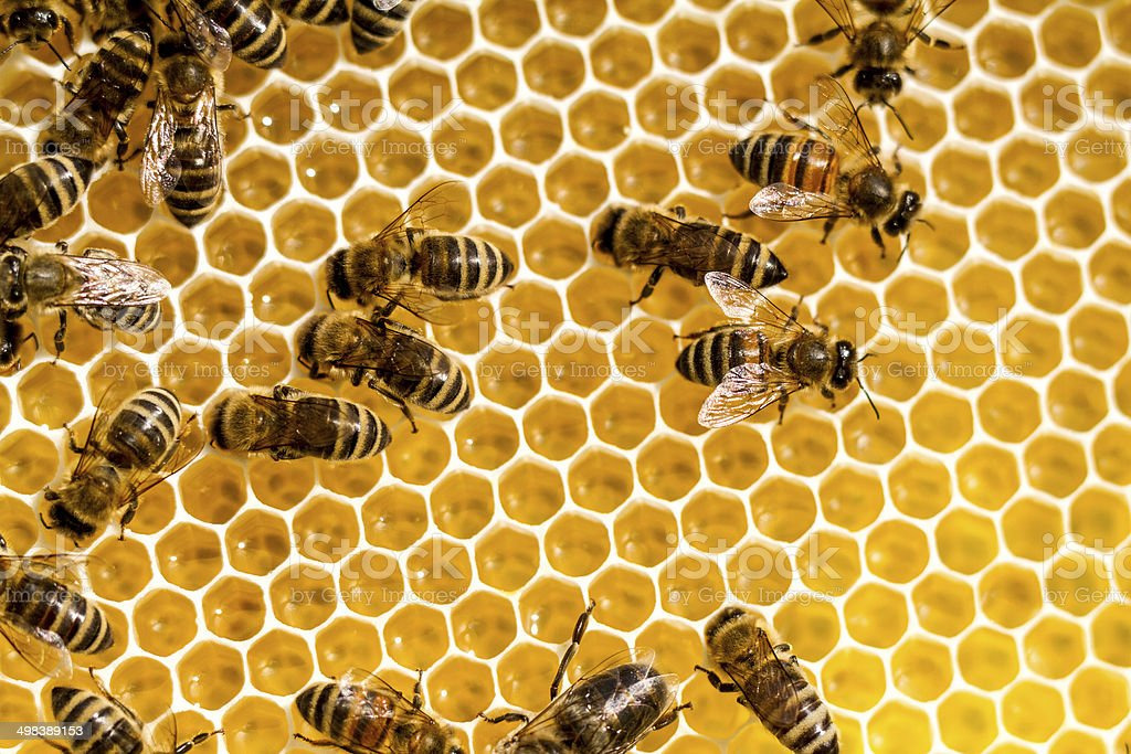 Honey And Bees stock photo
