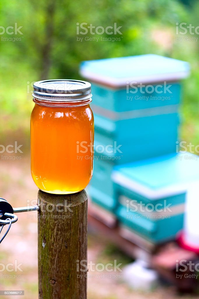 Honey and Hives stock photo