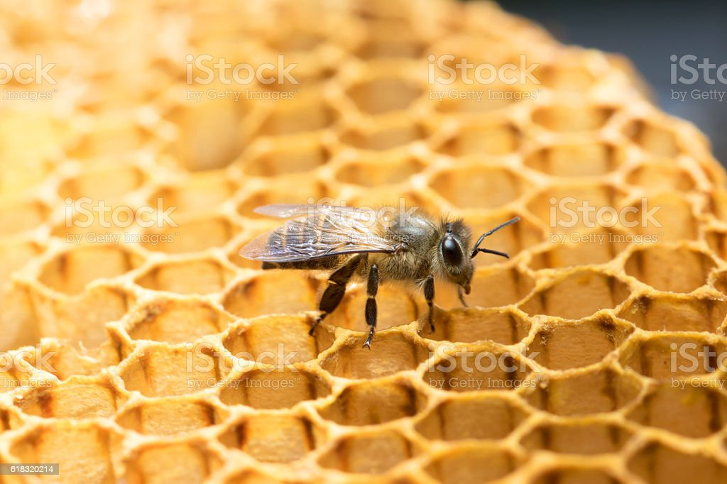 Honey Bee and beehive. stock photo