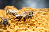 Honey Bee and beehive.