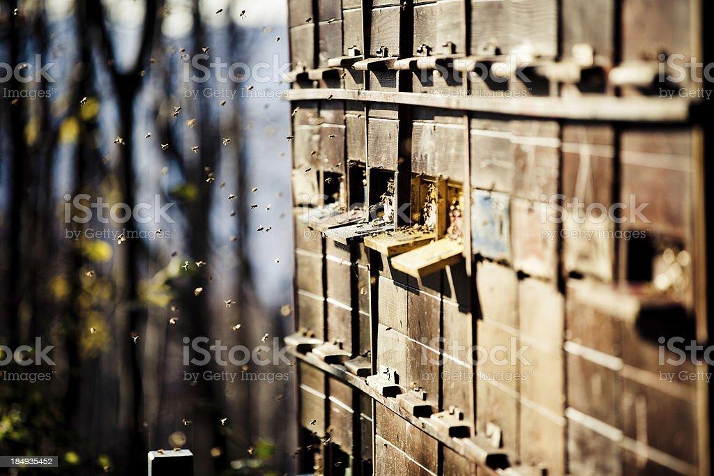 Honey Bee hive stock photo