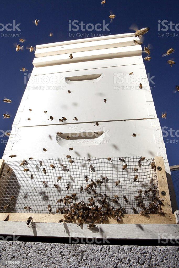 Honey Bee Hive royalty-free stock photo