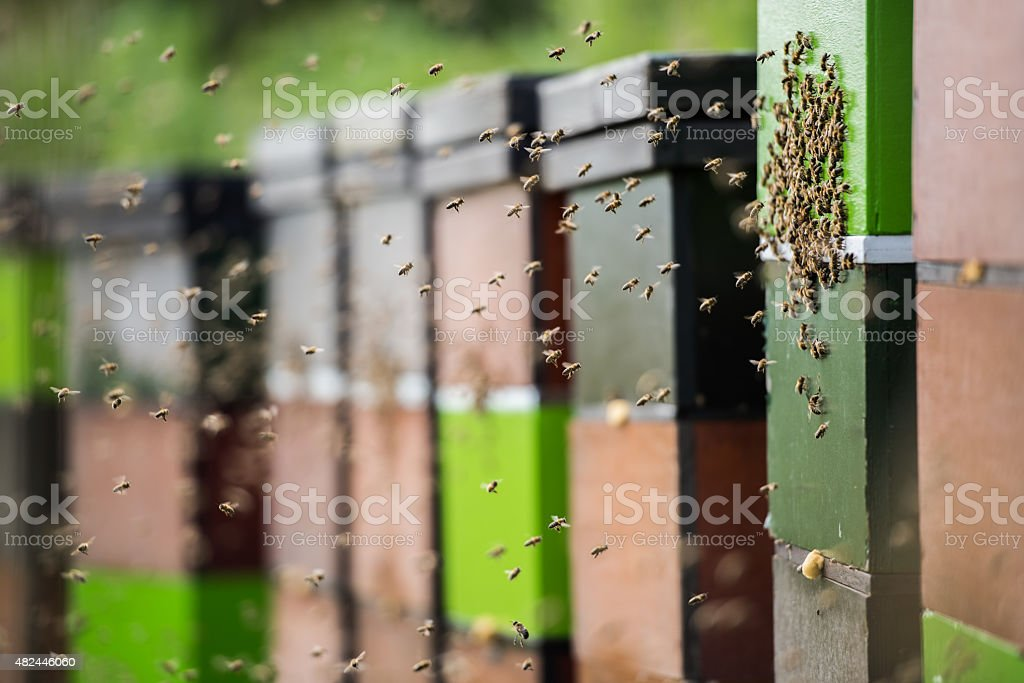 Honey bees at work, flying around their colorful hives stock photo