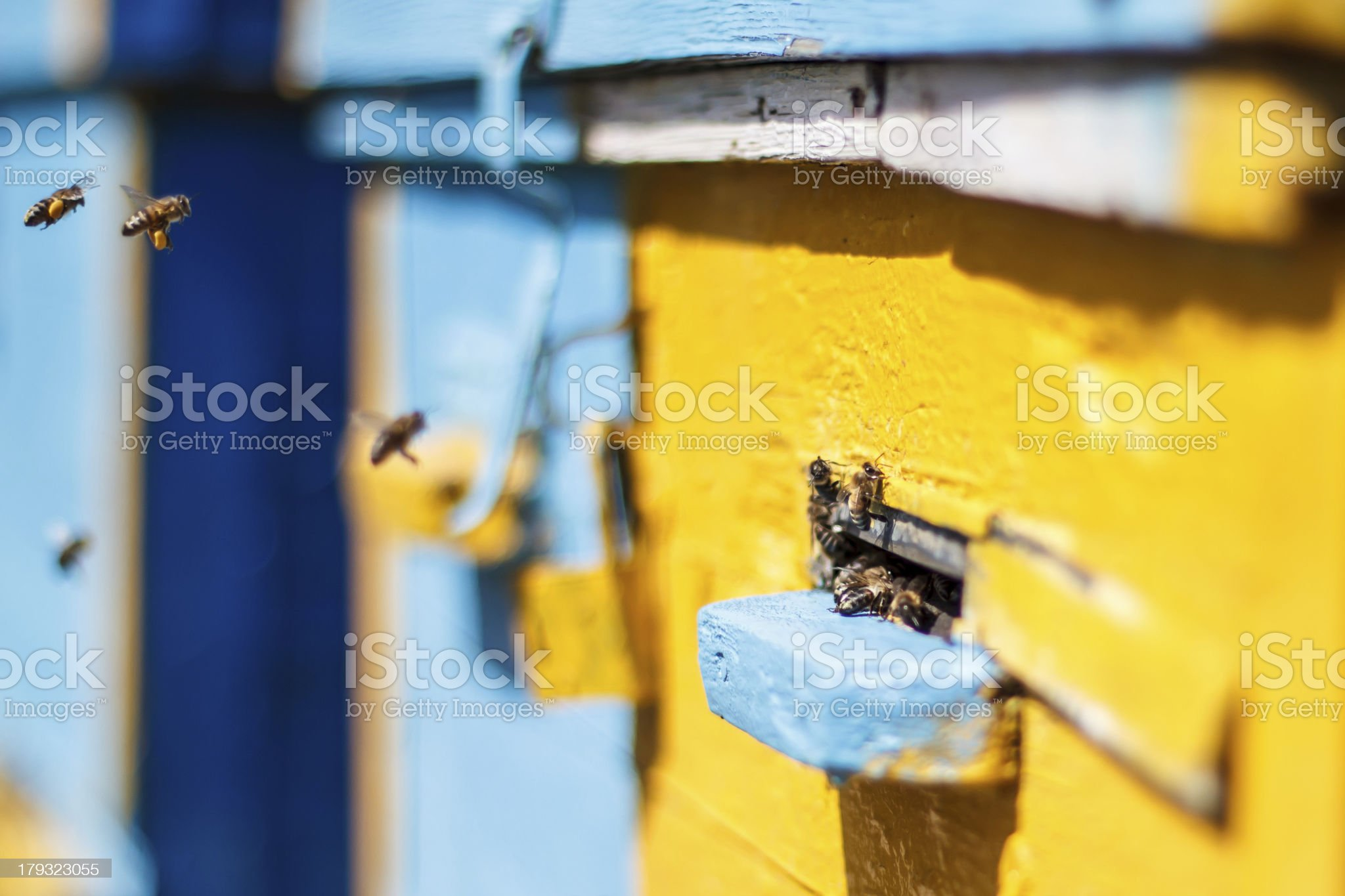 Honey bees before the hive entrance royalty-free stock photo