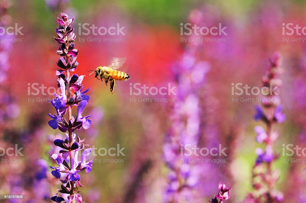 Honey bees, honey bees are working stock photo