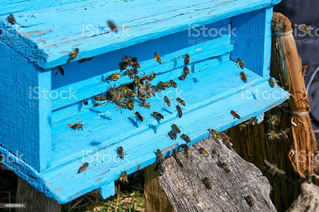 Miel bees cerca de una Colmena, en vuelo foto de stock libre de derechos