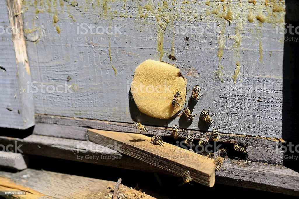Honey bees swarming around their beehive royalty-free stock photo