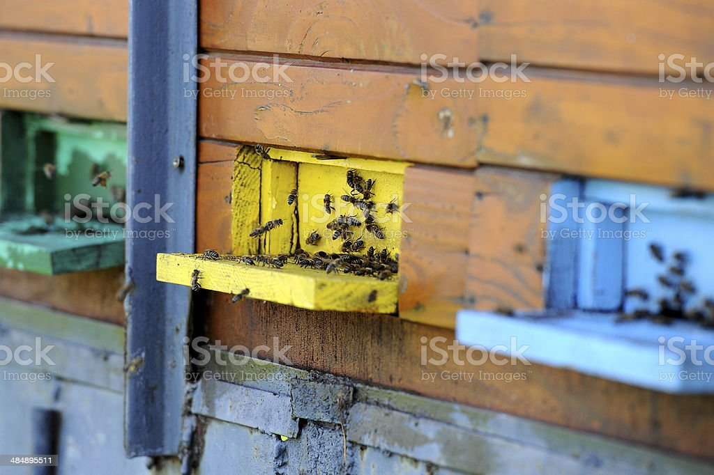 허니 비 작업 royalty-free 스톡 사진
