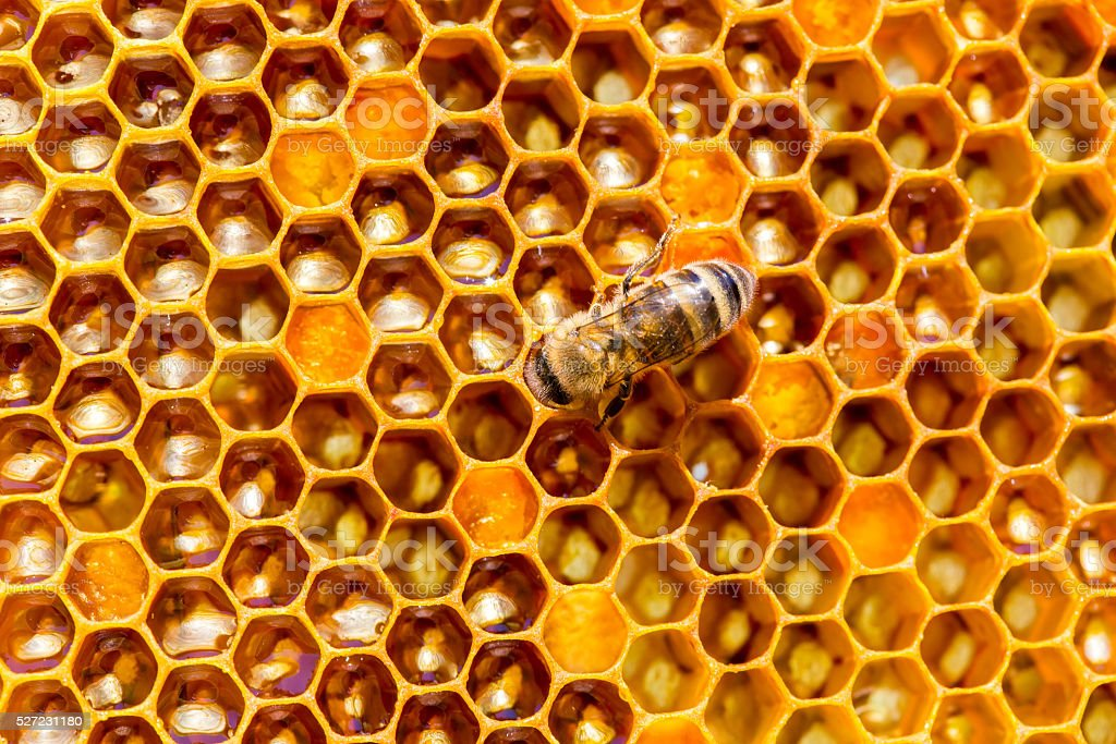 Honey cells pattern.bees work on honeycomb. stock photo