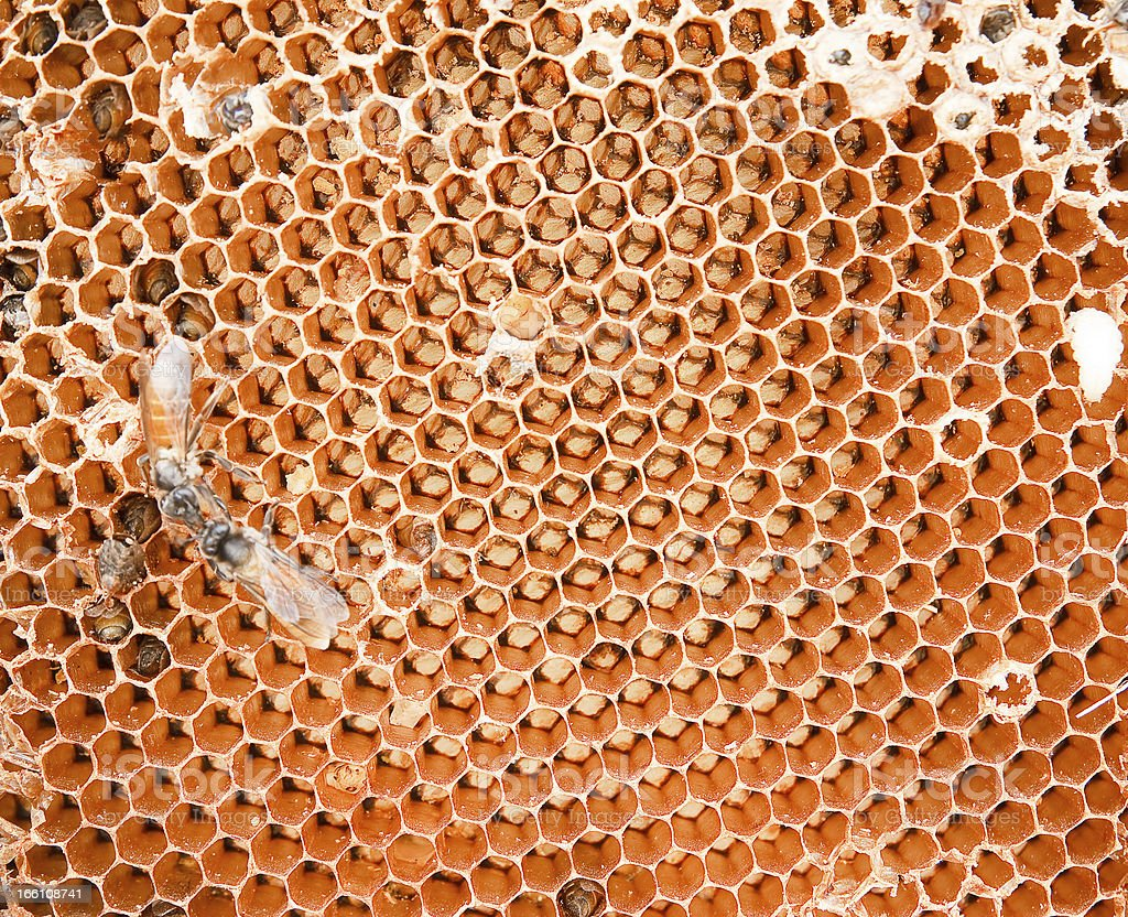 honey comb and a bee working royalty-free stock photo