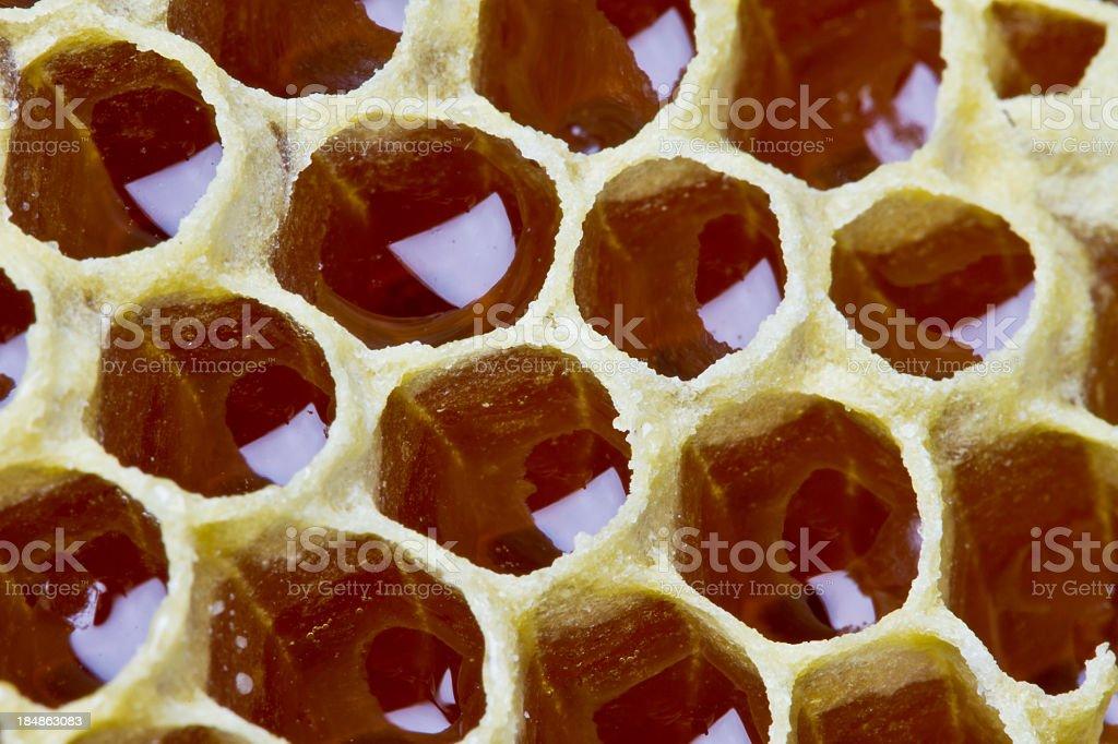 Honey Comb Closeup royalty-free stock photo
