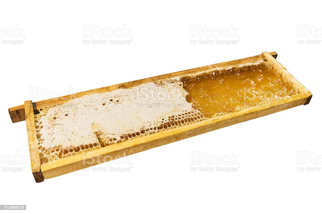 Honey comb in beehive for sample flavor testing stock photo