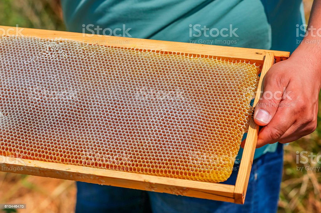 honey comb in the frame stock photo