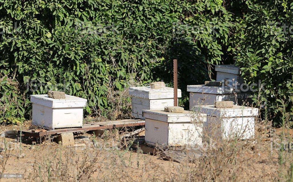 Honey Hives. stock photo
