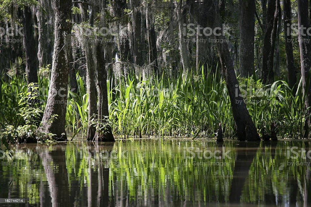Honey Island Swamp- Louisiana royalty-free stock photo