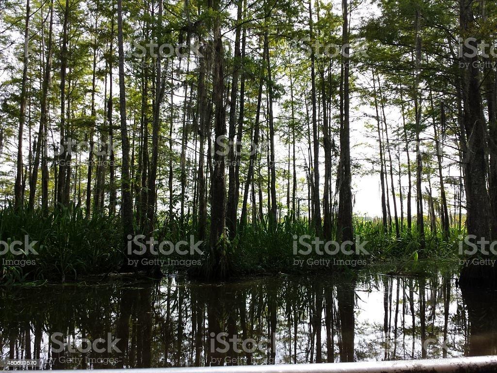 Honey Island Swamp stock photo