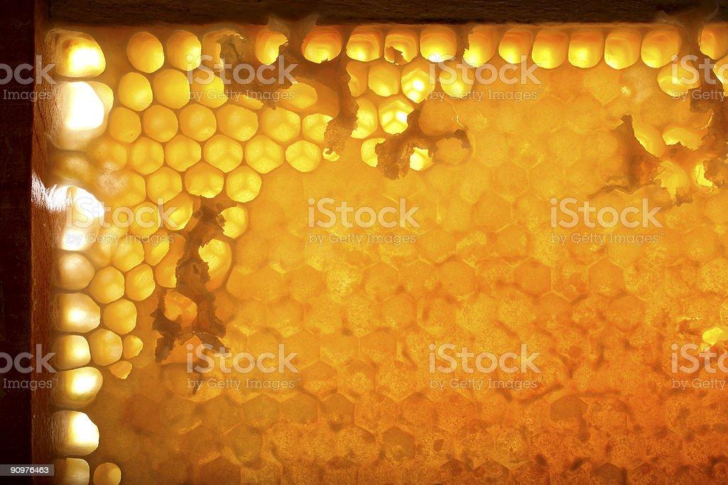 close up beautiful honeycomb stock photo