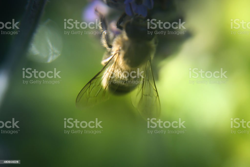 honeybee on flower stock photo