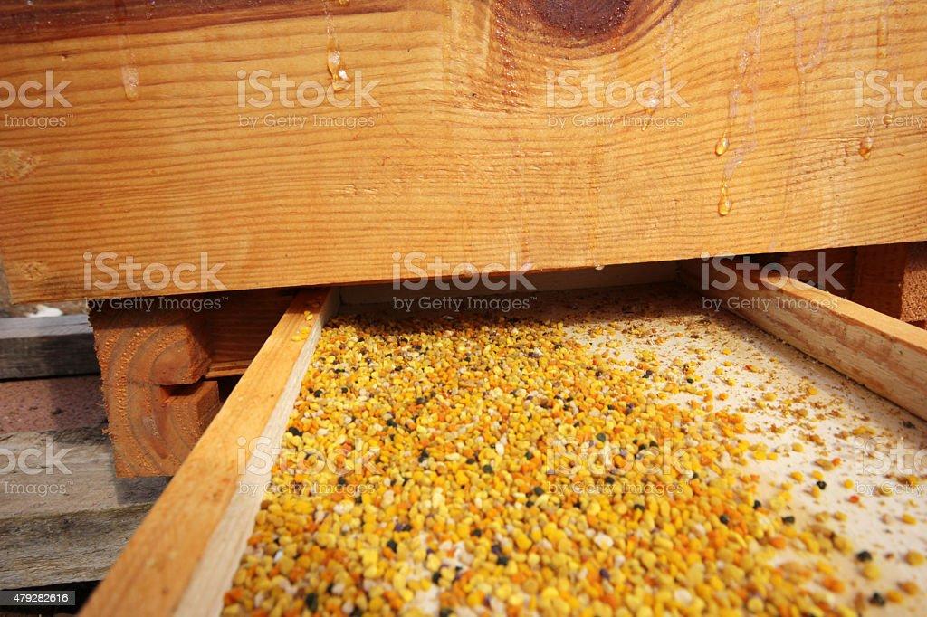 Honeybee pollen stock photo