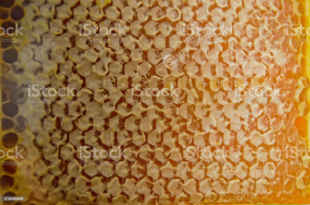Honeycomb alveoles stock photo