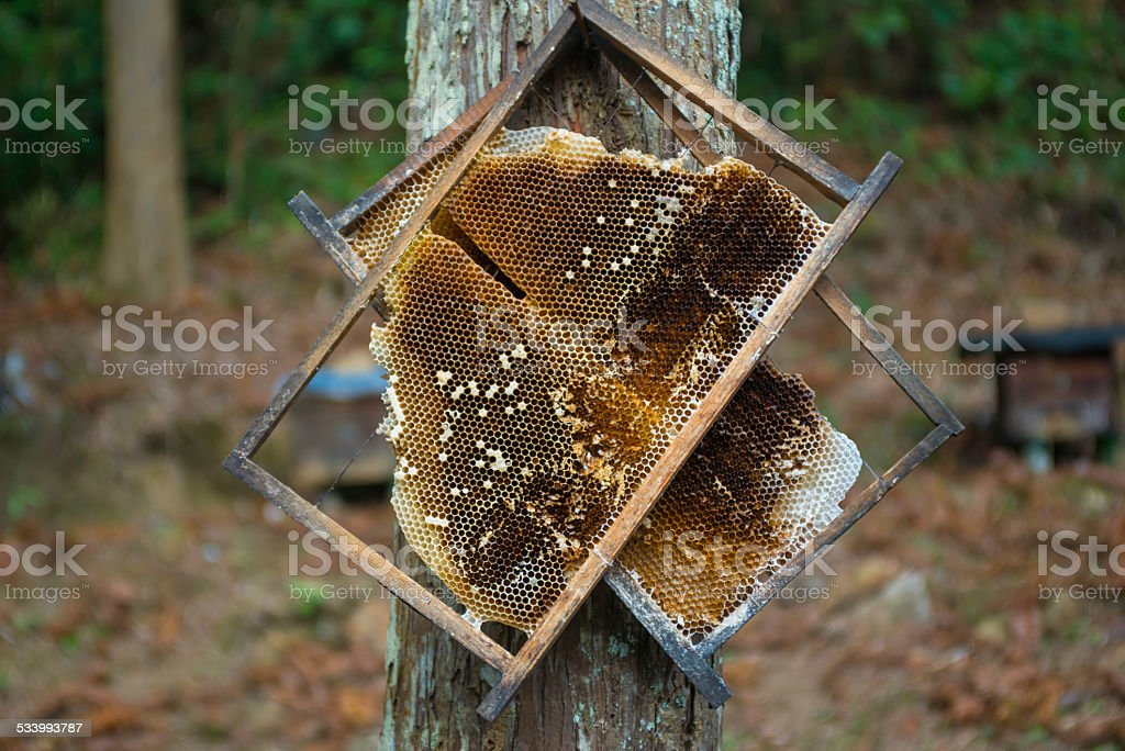 honeycomb board hanging on the tree stock photo