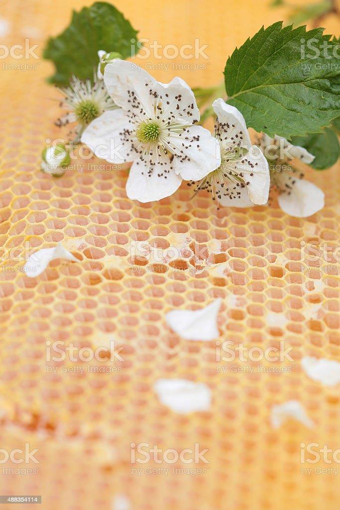 Honeycomb empty and full of honey stock photo