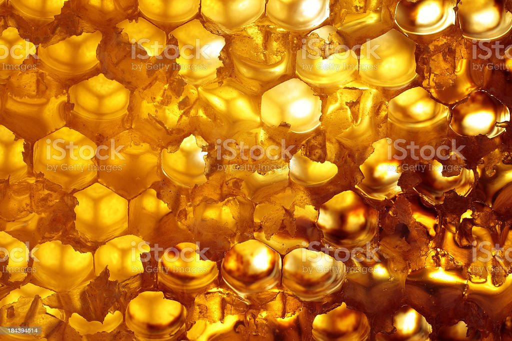 honeycomb stock photo