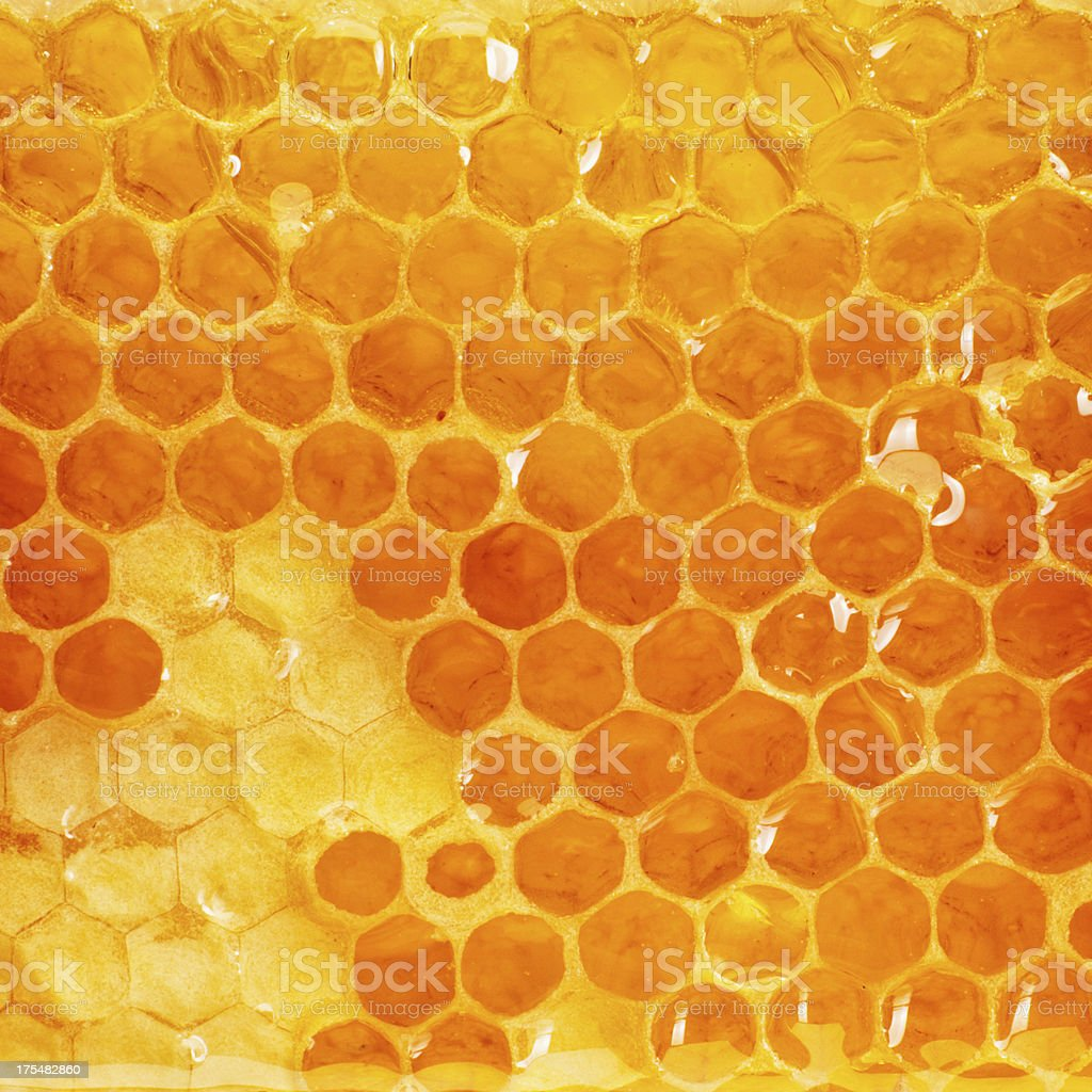 Honeycomb slice stock photo