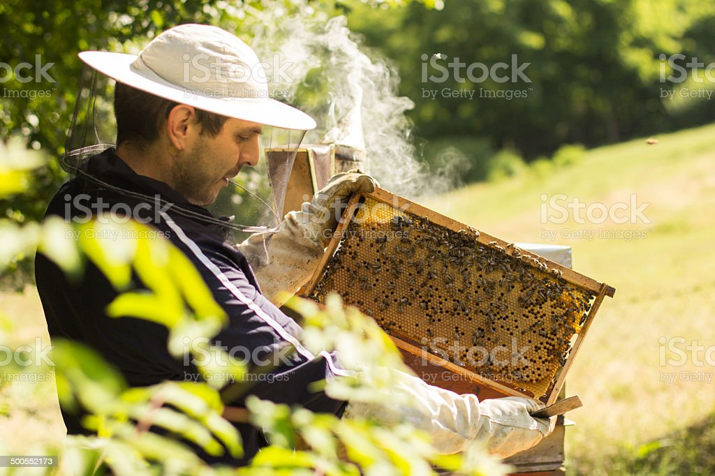 Honeycomb with bees and honey stock photo