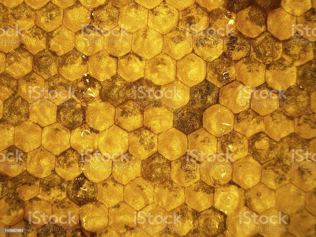 honeycombs 1 royalty-free stock photo