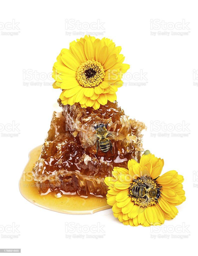 Honeycombs royalty-free stock photo