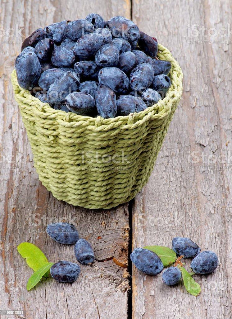 Honeysuckle Berries royalty-free stock photo