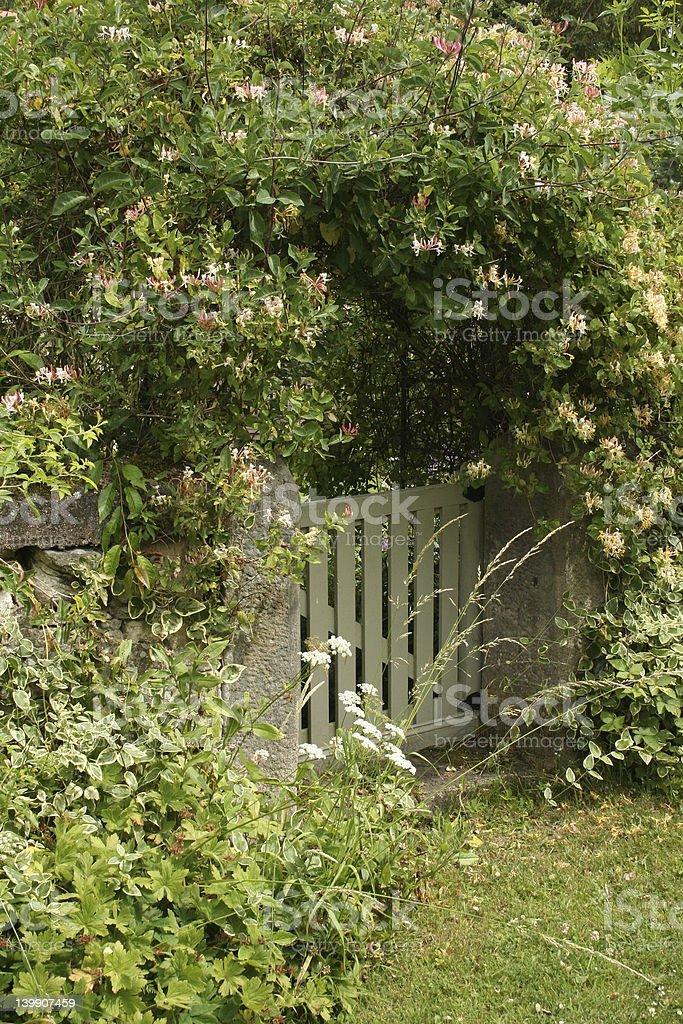 Honeysuckle gate stock photo