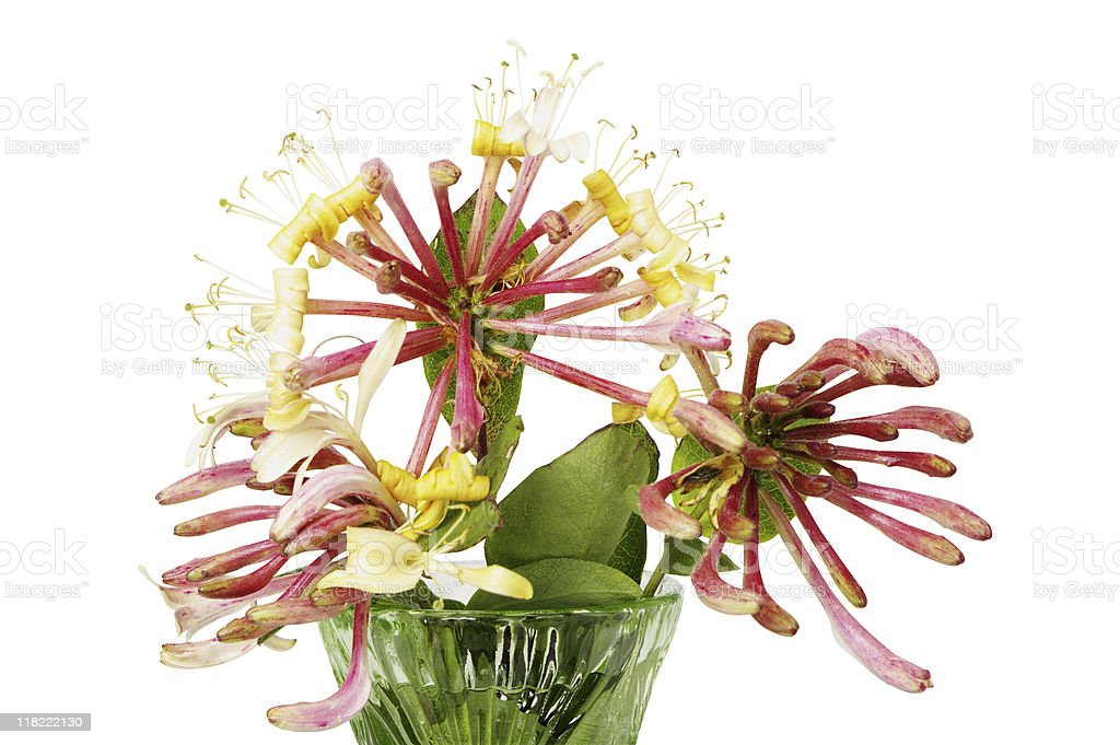 Honeysuckle In Vase Isolated On White stock photo