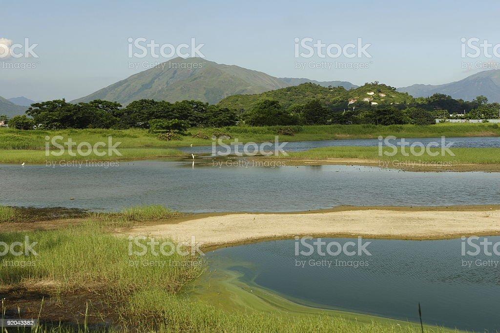 Hong Kong Wetland stock photo
