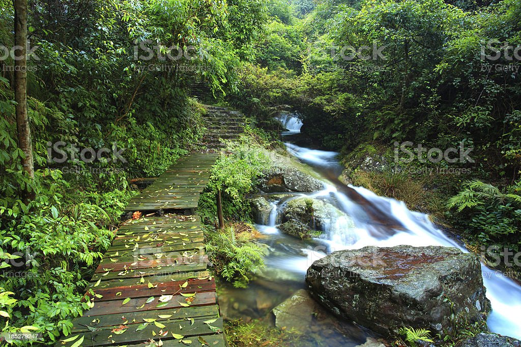 hongxi river in Primitive forest royalty-free stock photo