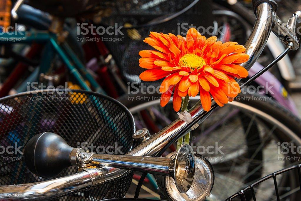 Honk if you like my Daisy stock photo