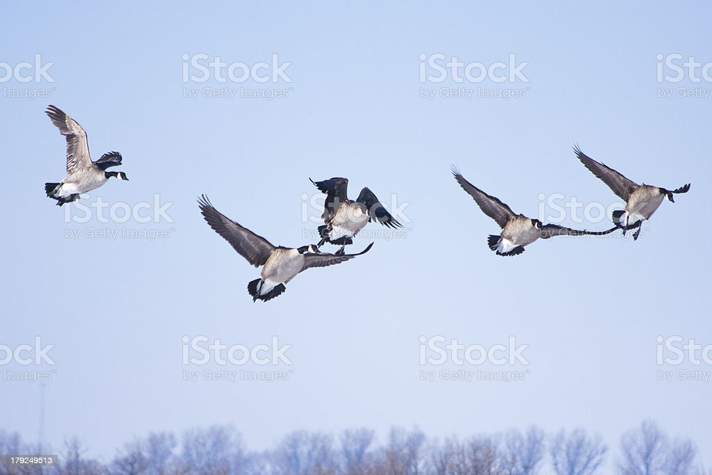 Honkers Landing royalty-free stock photo