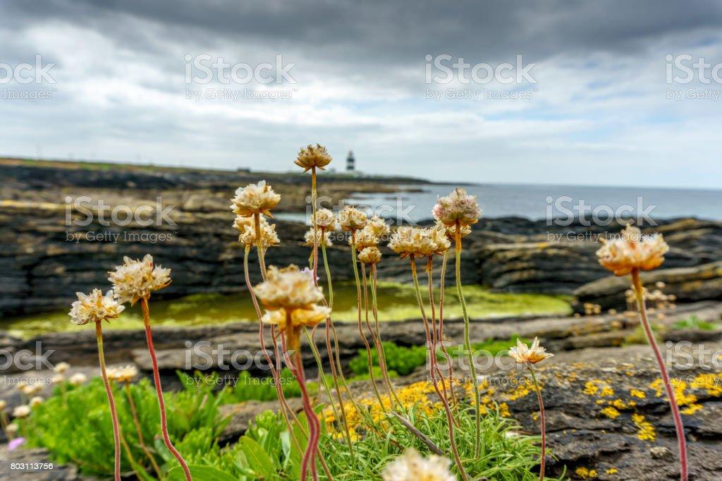 Hook lighthouse on the Ireland coast
