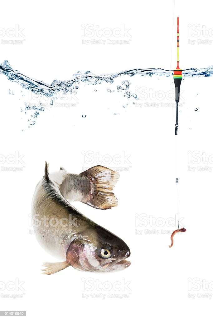 Hook with bait and float, fish isolated on white stock photo