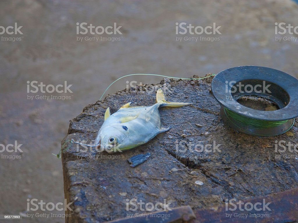 hooked fish on dock stock photo
