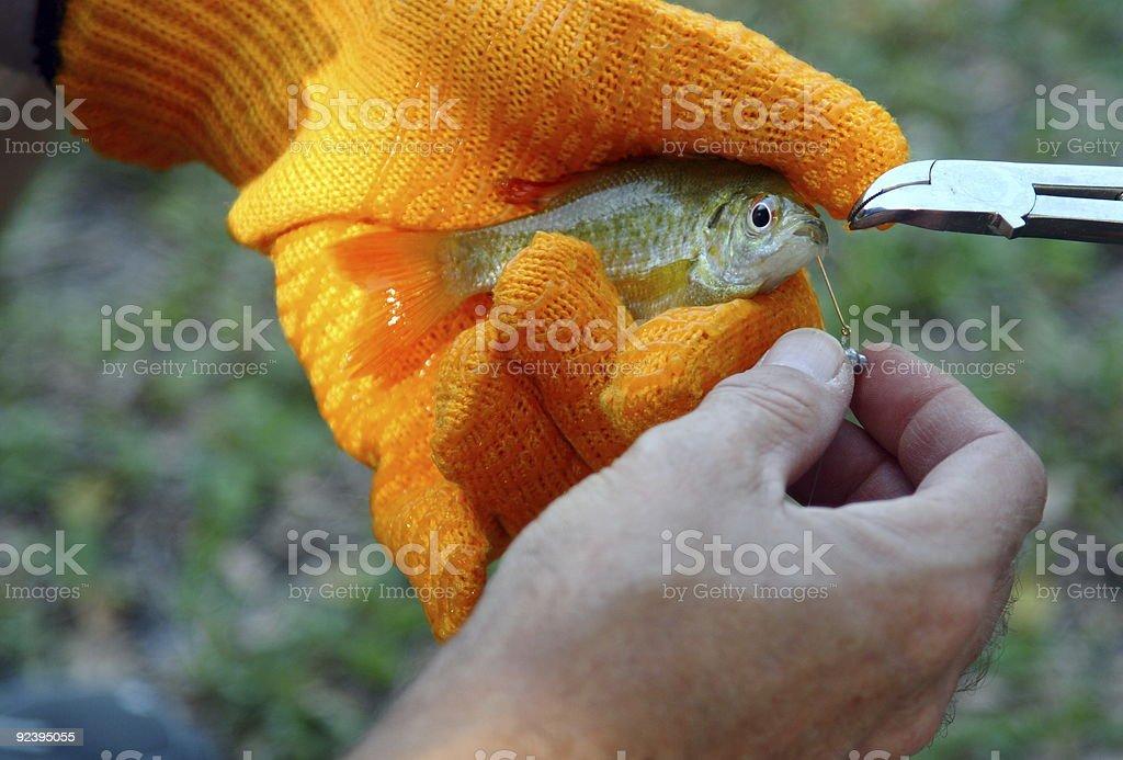 Hooked Sunfish royalty-free stock photo