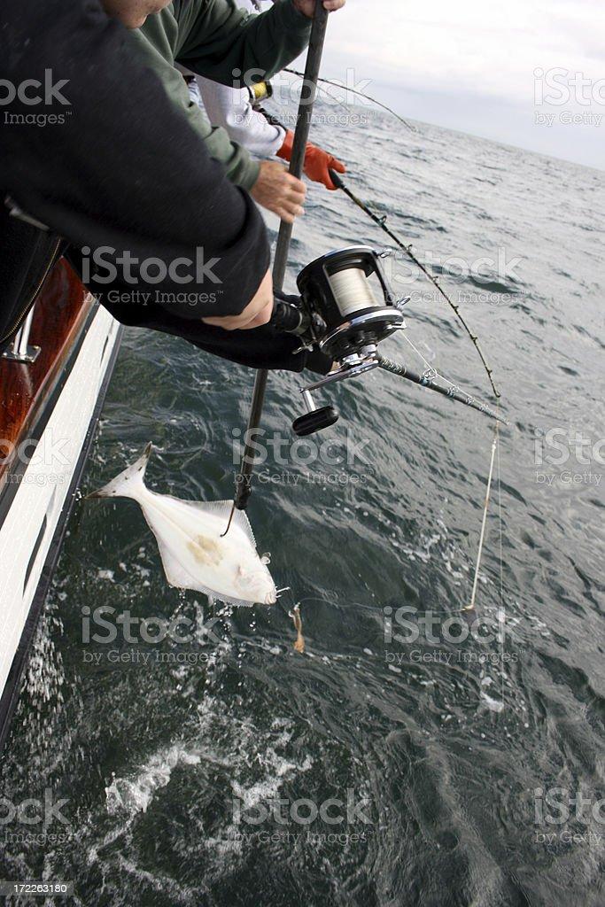 Hooking Halibut Sports Fishing stock photo