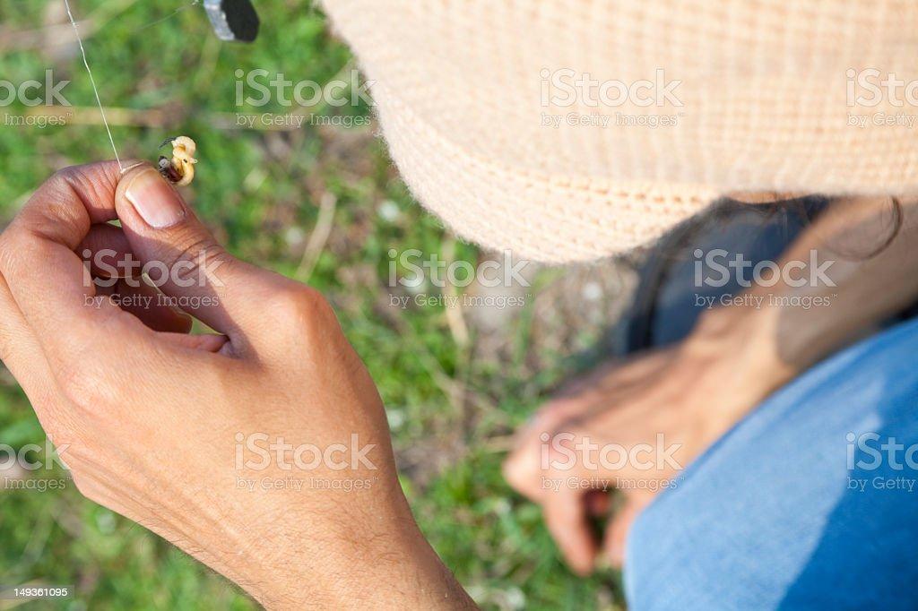 hooking maggots stock photo