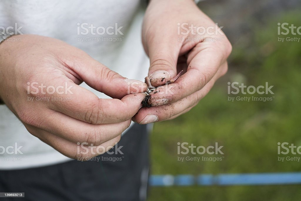 Hooking the bait royalty-free stock photo