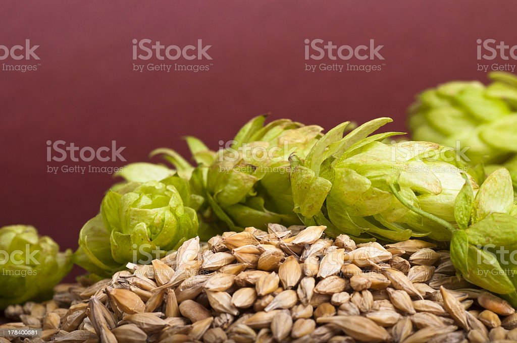 Hop cones and malt royalty-free stock photo