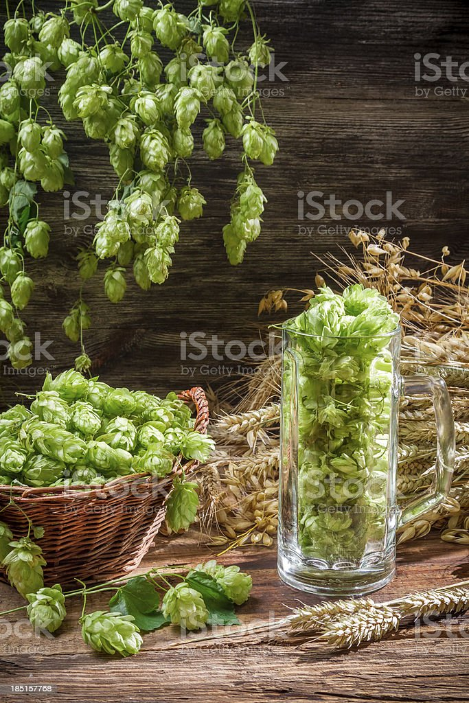 Hop cones collected in a pint of beer royalty-free stock photo
