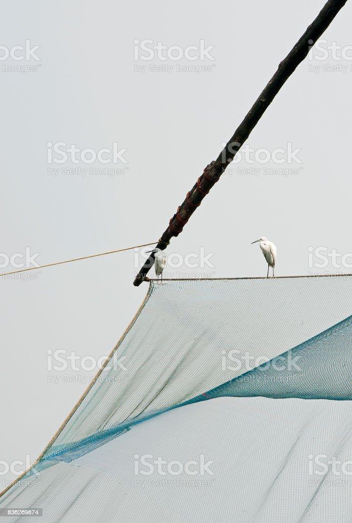 Hopeful Herons on Chinese fishing net, Fort Kochi, Cochin, Southern India stock photo