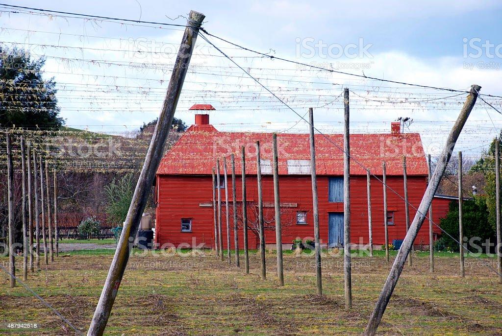 Hops Farm, New Zealand stock photo