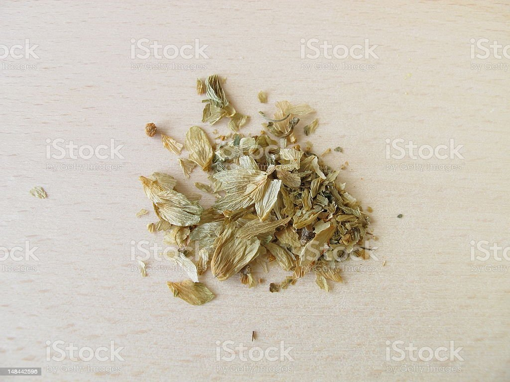 Hops flower cones, Lupuli strobuli stock photo